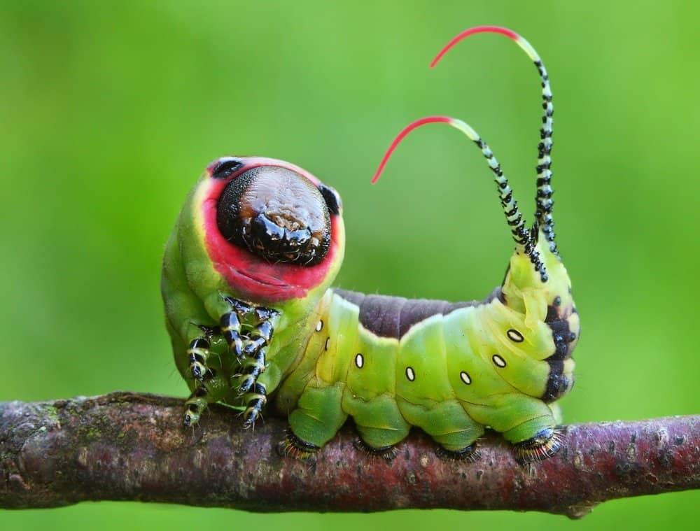 Oruga de mariposa en el árbol