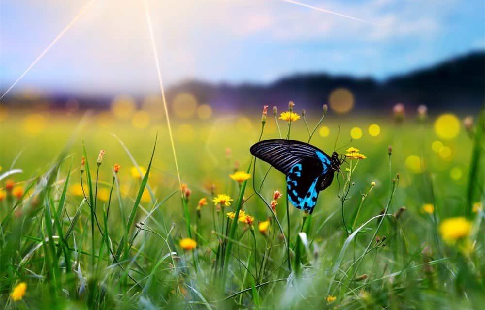 Los Ciclos de Vida de la Mariposa