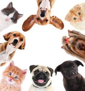 Collage de lindo mascotas en blanco
