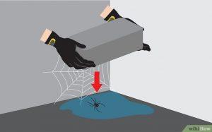 Cómo Matar Arañas Rápido en 3 Pasos Sencillos