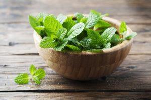 Hojas verdes frescas de menta sobre la mesa de madera