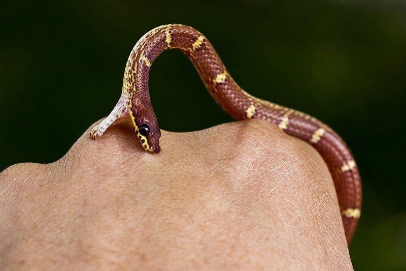 5 Mejores Kits de Mordedura de Serpiente para Sobrevivir