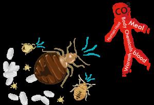 Mordeduras de Bichos 101: Mordedura de Pulgas Vs. Mordedura de Mosquito Vs. Mordedura de Araña Vs. Mordedura de Chigger