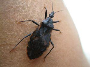 síntomas besos picadura de insecto