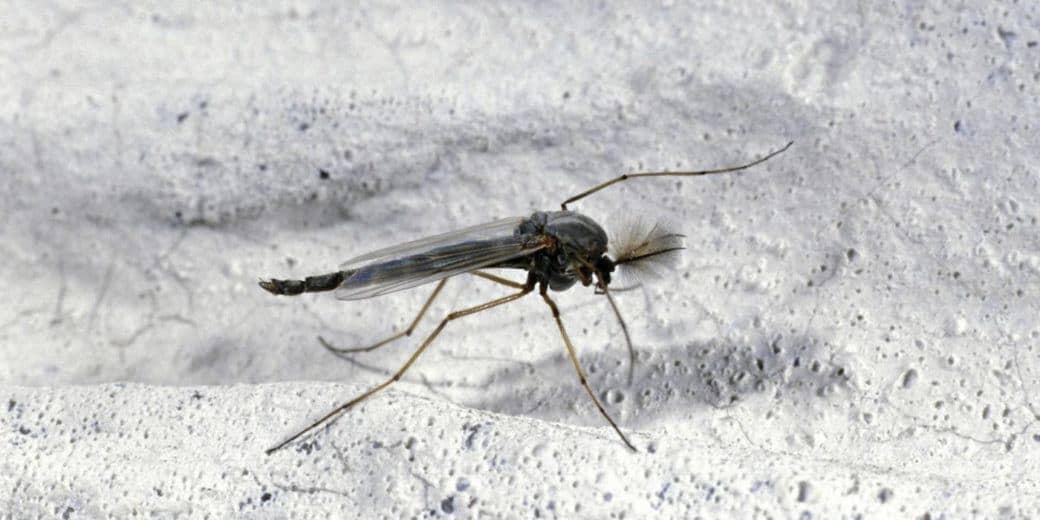 Trampas Caseras Fáciles (DIY) para Deshacerse de Mosquitos y Moscas de Frutas