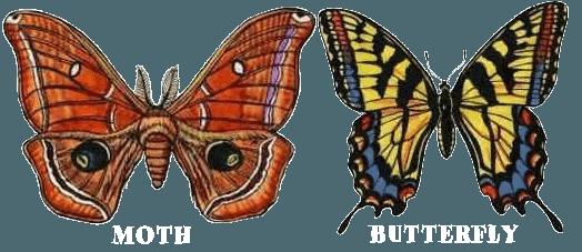 Polilla Vs Mariposa: Diferencias Físicas Básicas y 8 Hechos Fascinantes