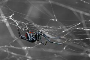 Mujer araña en descanso en web