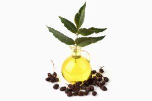 Aceite de neem y semillas en el blanco.