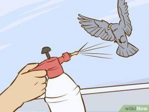 Usando spray para deshacerse de la paloma
