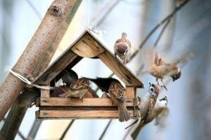 Pequeña casa de madera en el árbol que rodea por los gorriones de casa