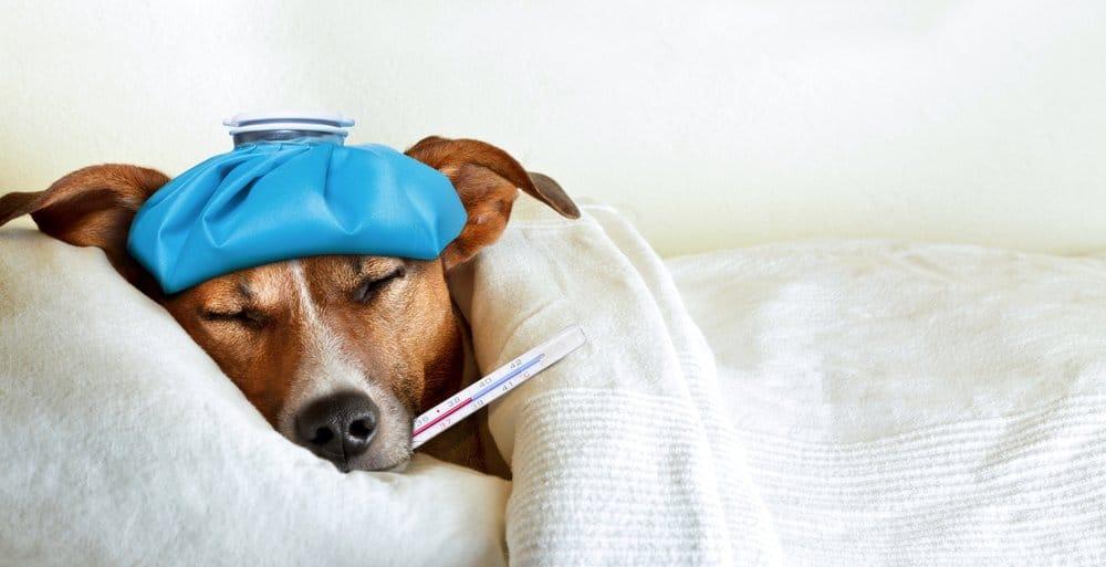 Un perro enfermo