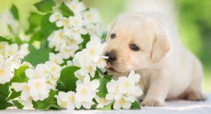 ¿Qué se Puede Utilizar como Repelente para Perros?