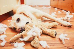 ¿Dónde Comprar Repelentes para Perros?