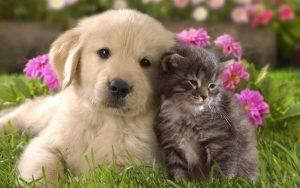 Lindo perro y gato son felizmente permanecer juntos