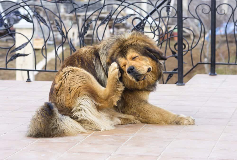 Un perro lindo se hace cosquillas a sí mismo
