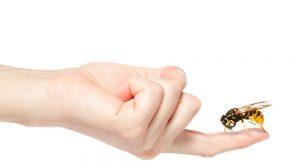 una abeja en el dedo humano