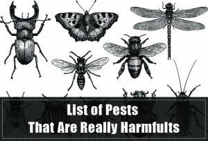 Lista de Plagas que son Realmente Dañinas