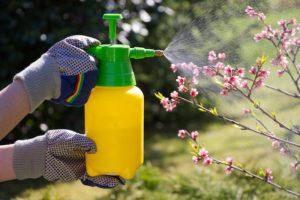Mujer con guantes pulverizando una floración plantas