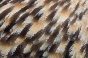 Acercamiento de plumas de búho
