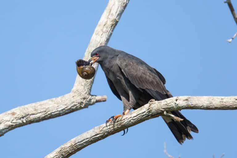 un pájaro negro en la rama