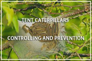 Orugas de Carpas: Control y Prevención