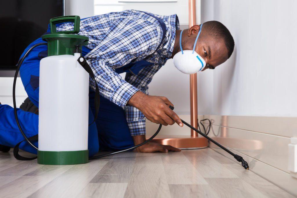 Un profesional de la plaga negra está examinando la casa