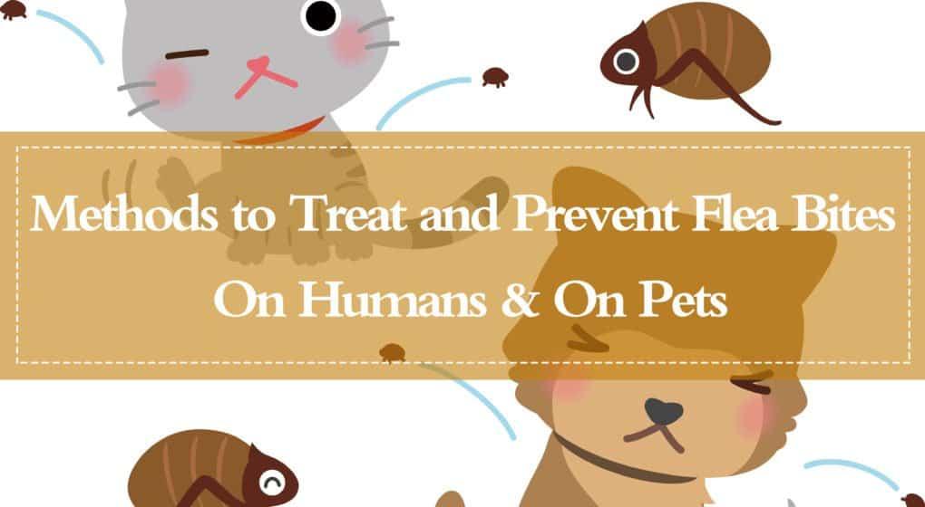 15 Métodos Potentes para Tratar e Prevenir Mordeduras de Pulgas em Humanos e Mascotas