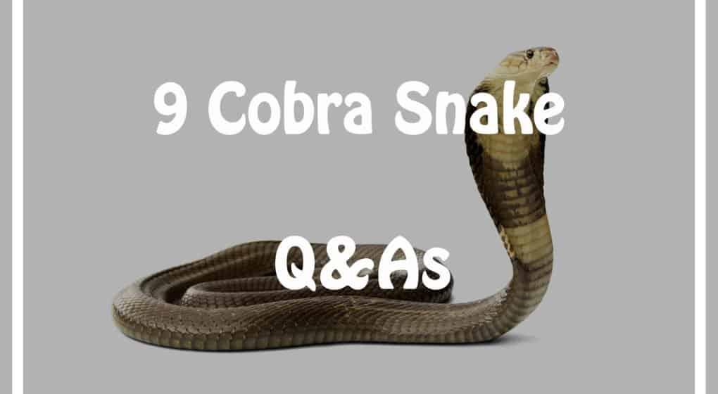 9 Cobra Serpiente Preguntas y Respuestas Cada Niño debe Saber