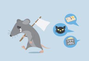 Rata levanta una bandera blanca para darse por vencido con la manera de deshacerse de la rata por la propiedad de la casa