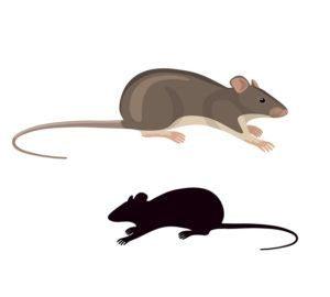 Rata de dibujos animados y ratón en el backgroud blanco