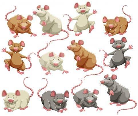 Ratones y ratas en diferentes colores