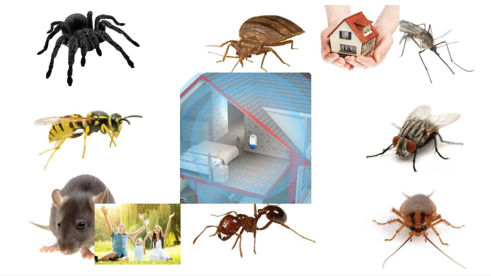 Pest Offense – Repelente Electrónico de Plagas