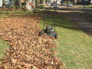 Retire los escombros del jardín y el exceso de monedero