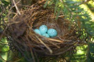 Saltando huevos de gorrión en un acogedor nido
