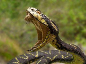 Una serpiente con una gran boca abierta
