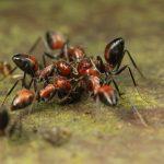 Un gran grupo de hormigas