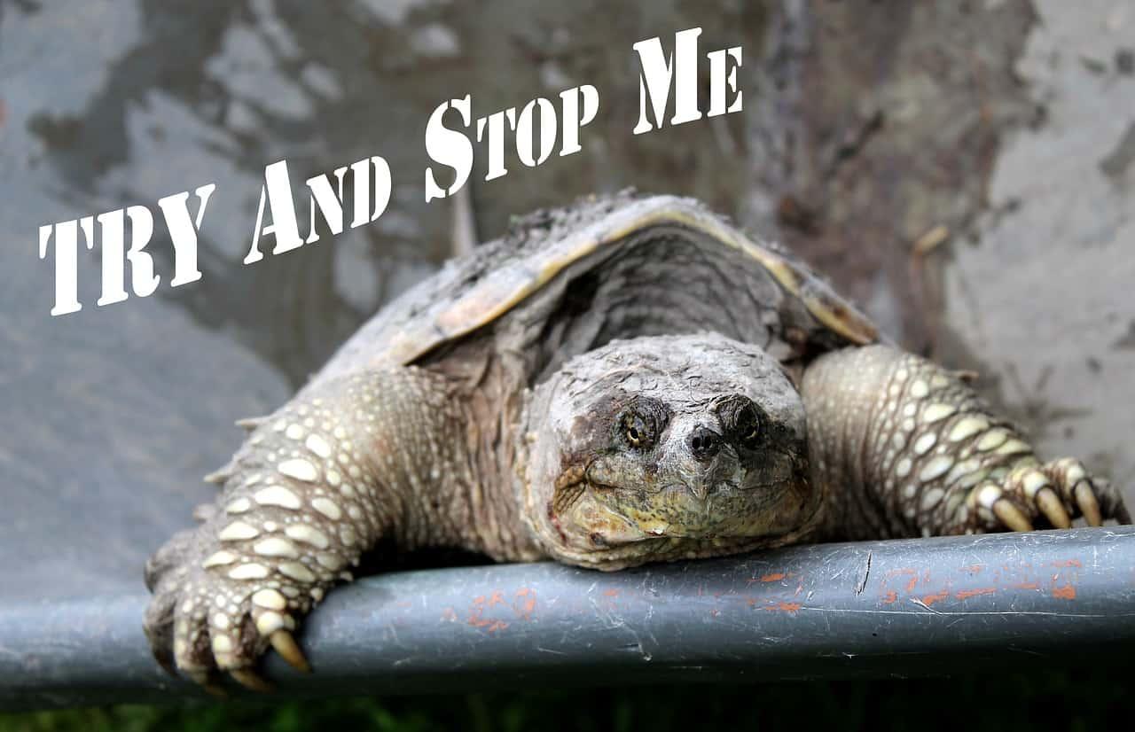 Tortuga Rompiendo — 10 Datos Interesantes de Tortuga Common