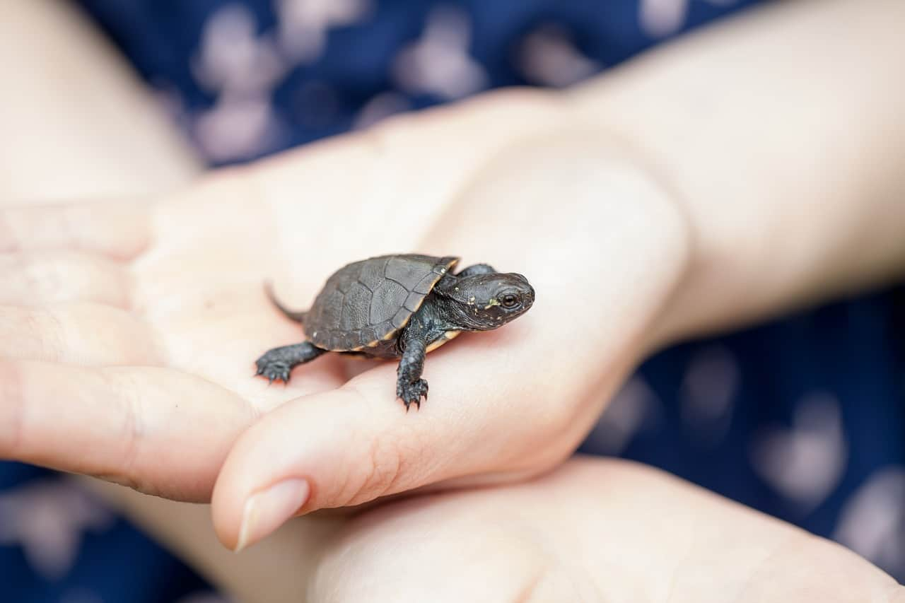 Cuidado de la Tortuga — Cómo Cuidar de una Tortuga