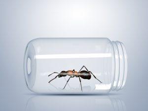Cómo Deshacerse de las Hormigas de Azúcar Rápido? 4 Formas de Erradicar Estas Hormigas Pesadas