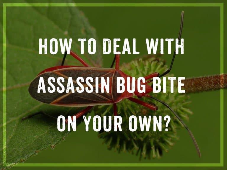 ¿Cómo Lidiar con la Picadura de Insecto Asesino por su Cuenta?