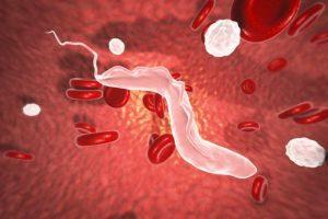 parásitos de la enfermedad del sueño