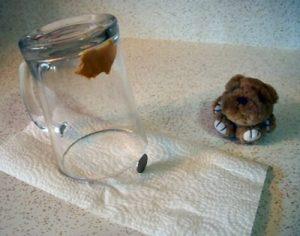 Usar frasco de vidrio coin ang para atrapar ratas