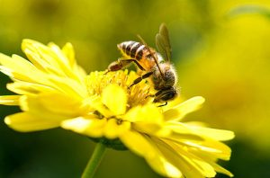 Una foto de una hermosa abeja y flores en un día soleado.