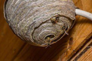 abejas anidando en casa