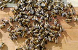 abejas en mesa de madera