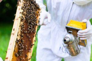 humano con un montón de abejas