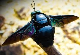 abeja negra en una rama