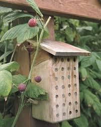 colmena de abeja negra en la naturaleza