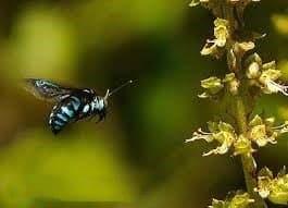 solo abeja negra en la naturaleza