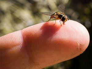una abeja sudorosa en la mano de un humano.